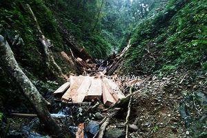 Hơn 20 phiến gỗ 'vô chủ' nằm cách chốt biên phòng chỉ…200m
