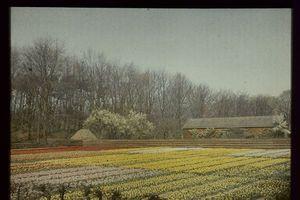 Ảnh màu cực đẹp về đất nước Hà Lan đầu thế kỷ 20