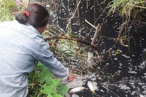 Nghệ An: Cá khe chết nhiều nghi nhà máy chế biến gỗ xả thải