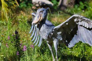 Kỳ thú loài chim có mỏ kỳ dị gây sốc
