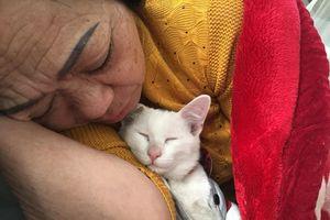 Cười thả ga với bộ ảnh các ông bố bà mẹ yêu mèo hơn cả con đẻ