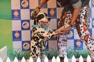 Thú vị cuộc thi sắc đẹp của những chú cún cưng tại Nha Trang