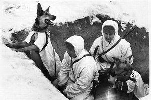 Chuyện chó chống tăng của Liên Xô trong thế chiến thứ 2