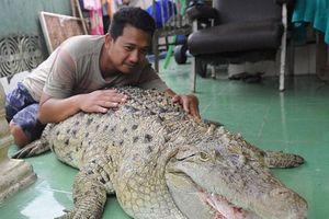 Cá sấu trở thành thú cưng ở một gia đình Indonesia