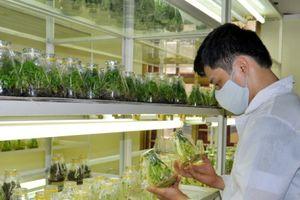 Nhiều ứng dụng khoa học công nghệ góp phần nâng cao giá trị nông sản
