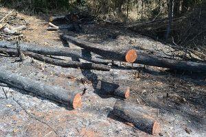 Đắk Nông: Tạm giữ 5 đối tượng trong vụ phá rừng quy mô lớn tại Quảng Sơn