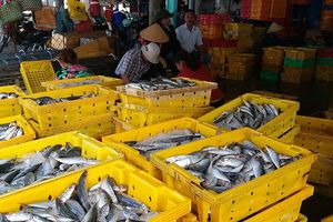 Cảng cá đón những chuyến tàu đầu tiên với niềm vui trúng mùa biển