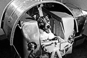 Những phi hành gia động vật từng bay vào vũ trụ