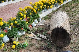 Phản cảm một số người tranh hoa, bất chấp lấy chậu ở đường hoa Tết
