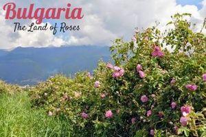 Ngày hội Hoa hồng Bulgaria và bạn bè năm 2018