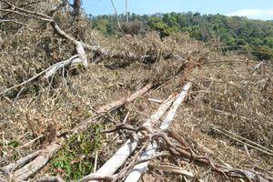 Đắk Nông: Bắt 5 đối tượng liên quan đến vụ phá gần 15 hecta rừng tại xã Quảng Sơn