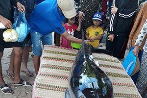Khánh Hòa cứu hộ thành công một con cá heo dạt vào bờ