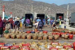 Bội thu cá cơm đầu năm, mỗi chuyến biển ngư dân kiếm 30 triệu đồng