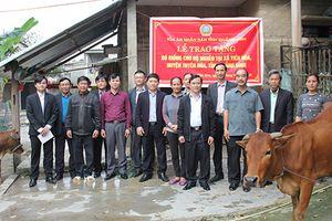 TAND tỉnh Quảng Bình tặng Bò giống cho hộ nghèo tại xã Tiến Hóa, huyện Tuyên Hóa