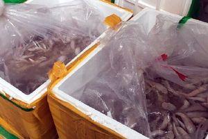 Tiêu hủy 950kg cá đông lạnh không rõ nguồn gốc