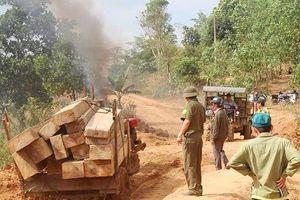 Lâm tặc bỏ lại hàng chục khối gỗ, nháo nhào tháo chạy khi gặp công an