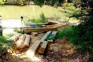 Đăk Lăk: Liên tục xảy ra nhiều vụ phá rừng quy mô lớn