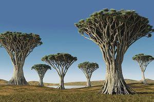 Những loài cây độc, lạ tưởng chỉ có ở chốn thiên đàng