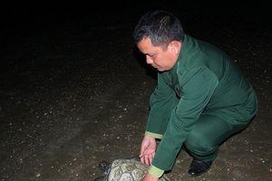 Trả ngư dân 1 triệu, thả rùa quý về biển