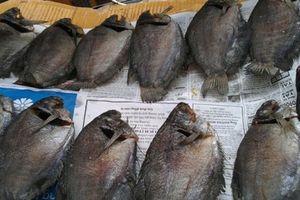 'Chết ngất' với đặc sản cá bổi U Minh