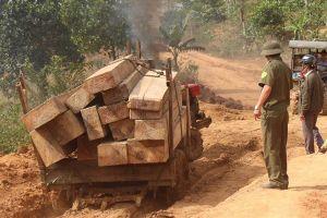 Đắk Lắk: Làm rõ trách nhiệm để lâm tặc ngang nhiên chở gỗ ra khỏi rừng