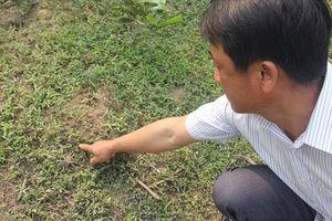 Nơi đàn dê bị tấn công ở Quảng Trị có nhiều dấu chân 2 cá thể báo hoa mai