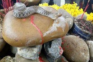 Tiền cúng rắn nước ở Quảng Bình sẽ dùng thế nào?