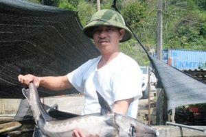 Đáng nể mô hình nuôi cá tằm, cá hồi thu 3 tỷ đồng/năm ở vùng cao