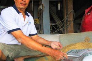 Nhiều người nhận là chủ nhân 3 cây vàng đánh rơi trong bao lúa