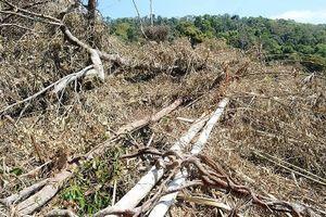 Khởi tố, bắt tạm giam 5 đối tượng phá hơn 14ha rừng