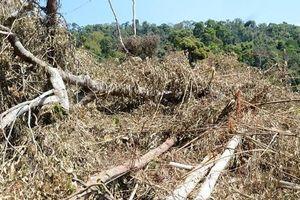 Đắk Nông: Bắt tạm giam 5 đối tượng phá 14ha rừng để trồng cây