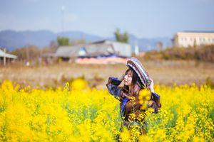 Mùa xuân, lên Mù Cang Chải ngắm cánh đồng hoa cải vàng ruộm