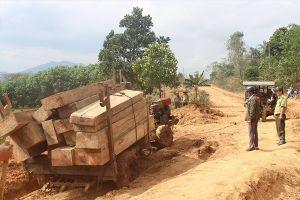 Rừng liên tiếp bị tàn sát ở Tây Nguyên: Chỉ xử lý 'nhẹ nhàng' cán bộ