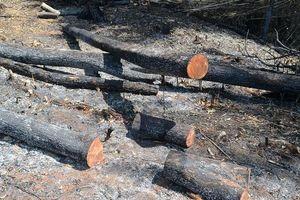 Đắk Nông: 5 đối tượng phá 14ha rừng để trồng cây bị bắt tạm giam