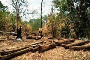 Đắk Lắk: Vườn quốc gia Yók Đôn tiếp tục 'chảy máu'