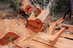 Thêm một vụ hủy hoại rừng ở vườn Quốc gia Yok Đôn