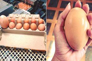 'Há hốc mồm' trước quả trứng gà khổng lồ '2 trong 1'