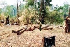 Phát hiện thêm vụ hủy hoại rừng ở Vườn quốc gia Yok Đôn