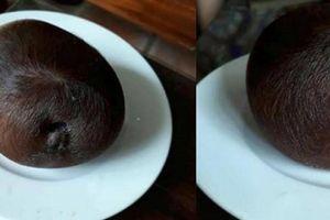 Kỳ lạ bò đẻ con xong, đẻ thêm một 'vật lạ' tròn như quả cam