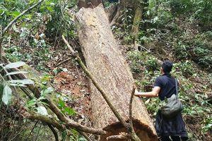 Gia Lai: Khởi tố vụ lâm tặc khoét núi, phá rừng