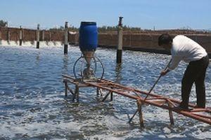 Ngư trường thuận lợi, các cơ sở chế biến hải sản đẩy mạnh sản xuất