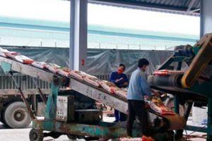 Sau tết, Supe Lâm Thao đã bán trên 3.000 tấn phân bón mỗi ngày
