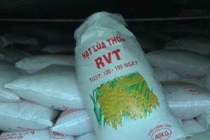 Cần Thơ: Phát hiện hơn 1.000 tấn lúa giống giả nhãn mác