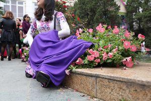 Đè lên hoa để chụp ảnh tại lễ hội hoa hồng