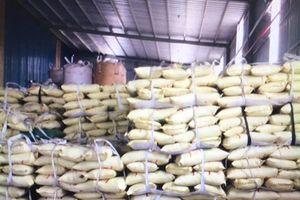 Bắt gần 1.000 tấn lúa giống giả thương hiệu của nhiều DN khác