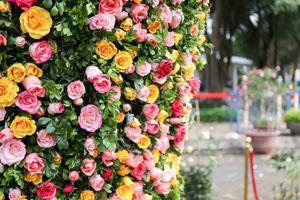 Khai mạc 'Ngày hội Hoa hồng Bulgaria và bạn bè'