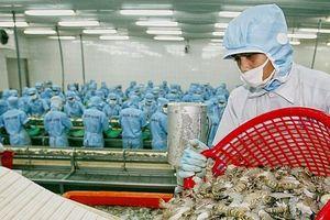 Xuất khẩu tôm Việt vào thị trường Mỹ bị áp mức thuế cao kỷ lục