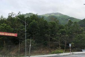 Bí thư huyện Sơn Tây: 'Tôi không có nhiều đất rừng như người ta nói'