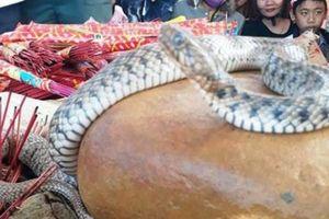 Vụ rắn nằm trên mộ ở Quảng Bình: Dân tái căng lều bạt, tiếp tục cúng bái