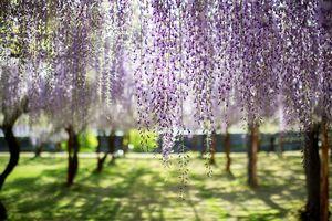 Nhật Bản đâu chỉ có hoa anh đào!